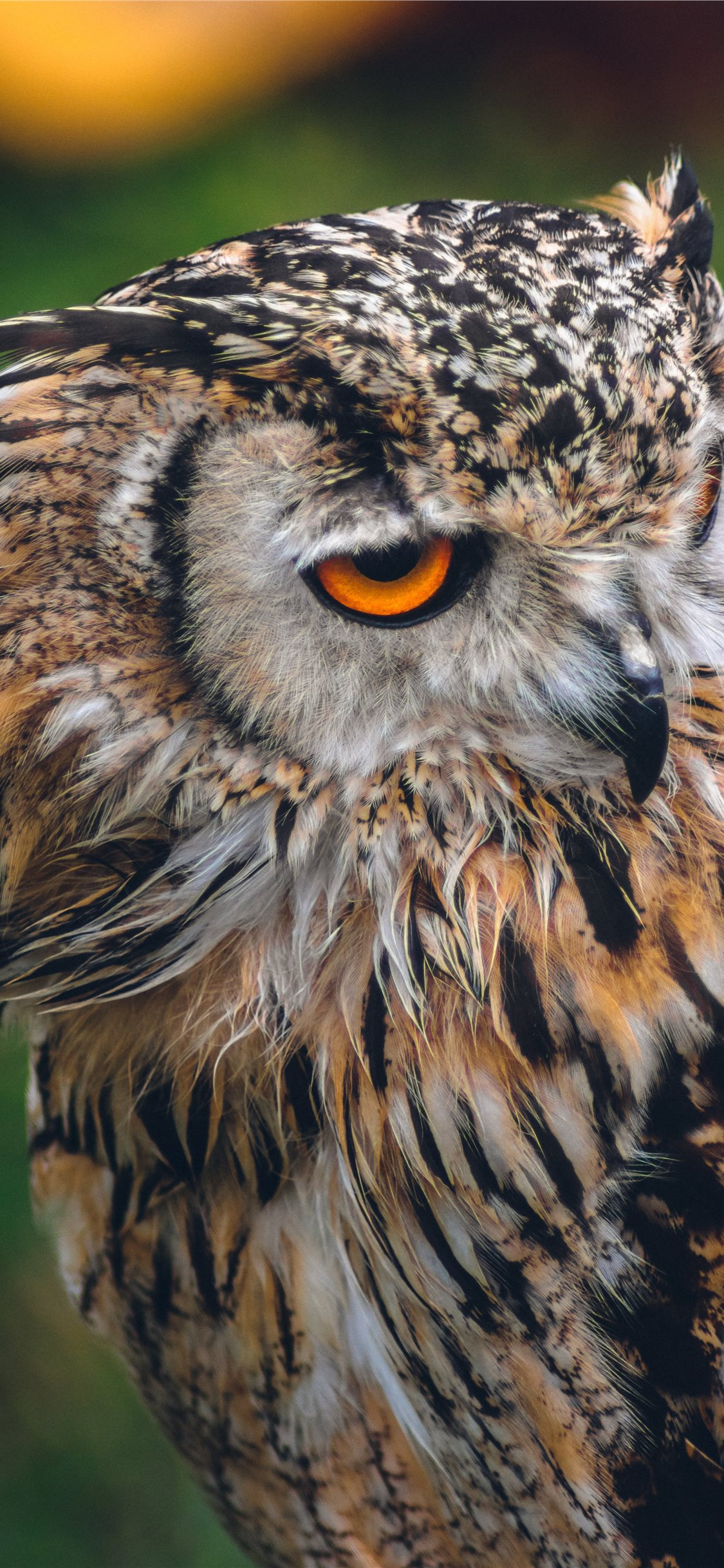 Owl Iphone Wallpapers Free Download