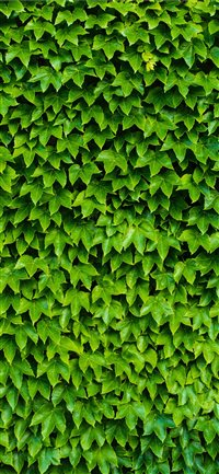 foliage iPhone X wallpaper
