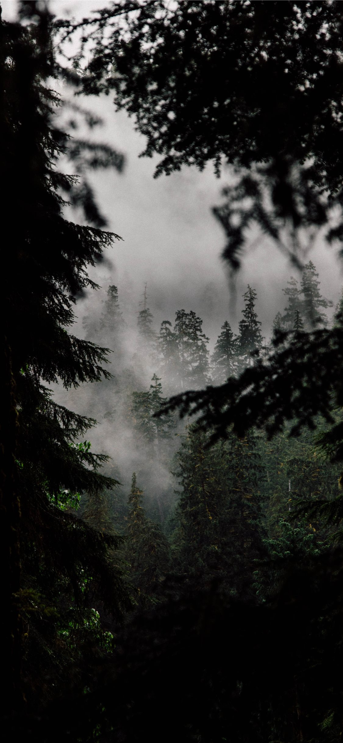 In The Quiet Woods Iphone X Wallpapers Free Download