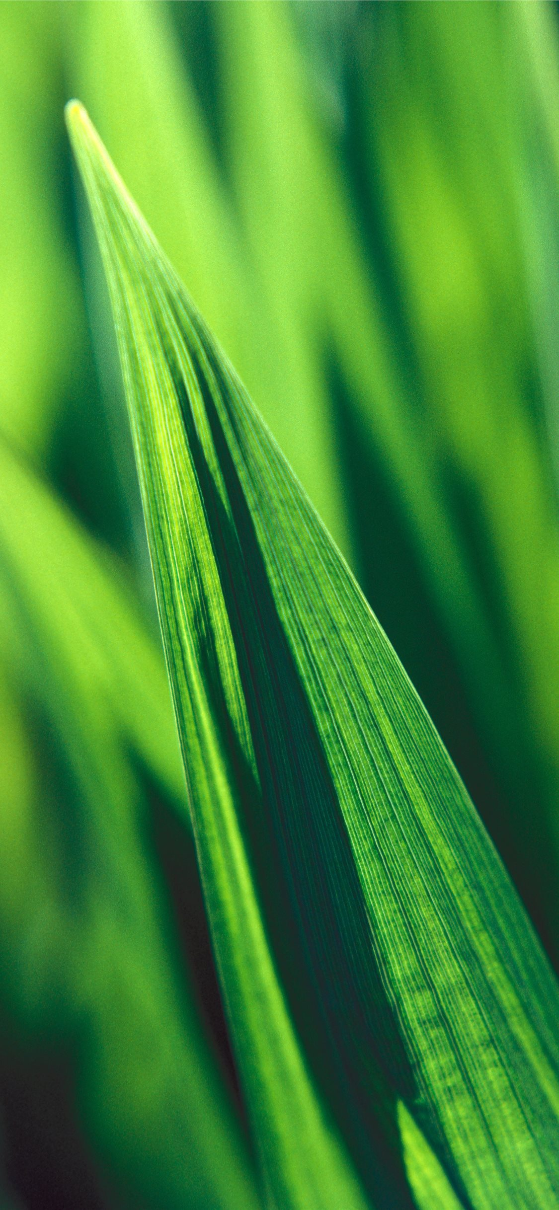 Green Reeds Iphone Wallpapers Free Download