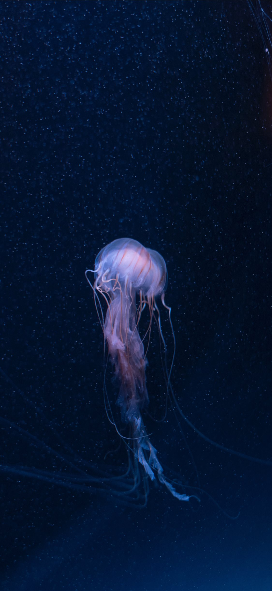 Best Jellyfish iPhone X HD Wallpapers ...