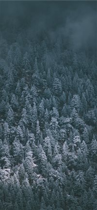 Snow Covered Pines iPhone X wallpaper