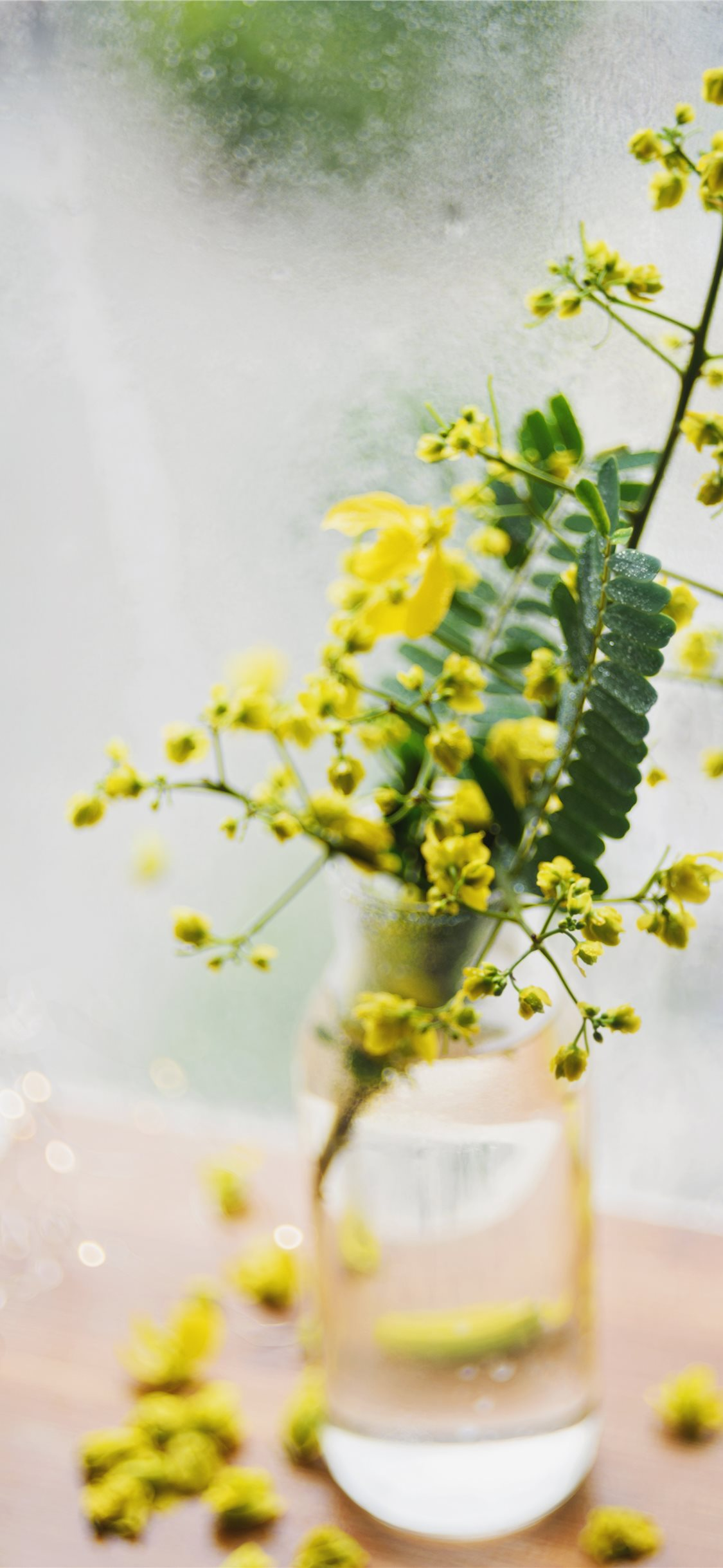 Still Life With Yellow Wild Flowers In A Vase Iphone X Wallpapers Free Download