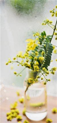 Best Yellow Flower Iphone X Wallpapers Hd Ilikewallpaper