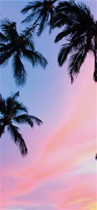Kihei  United States iPhone X(S/Max/R) wallpaper