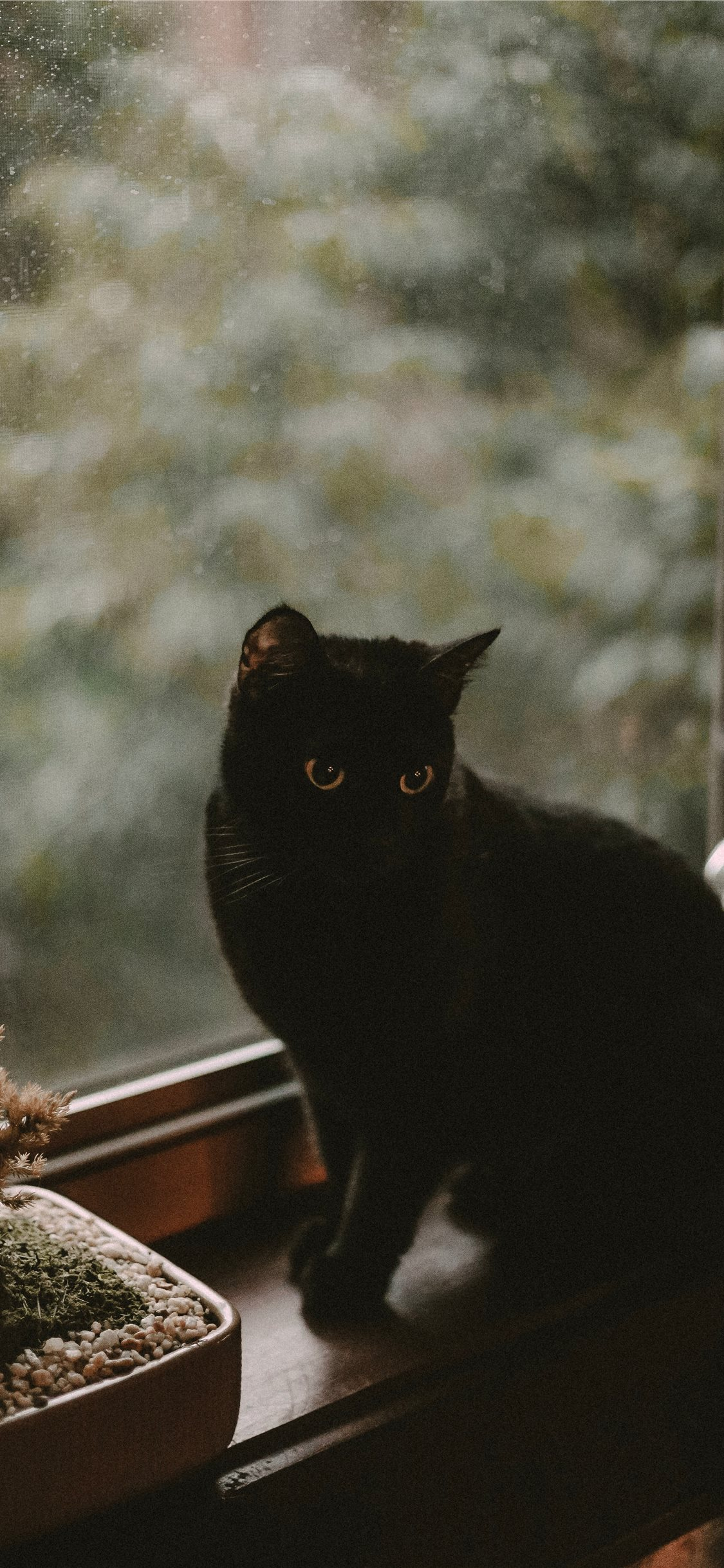 Black Cat Iphone X Wallpapers Free Download