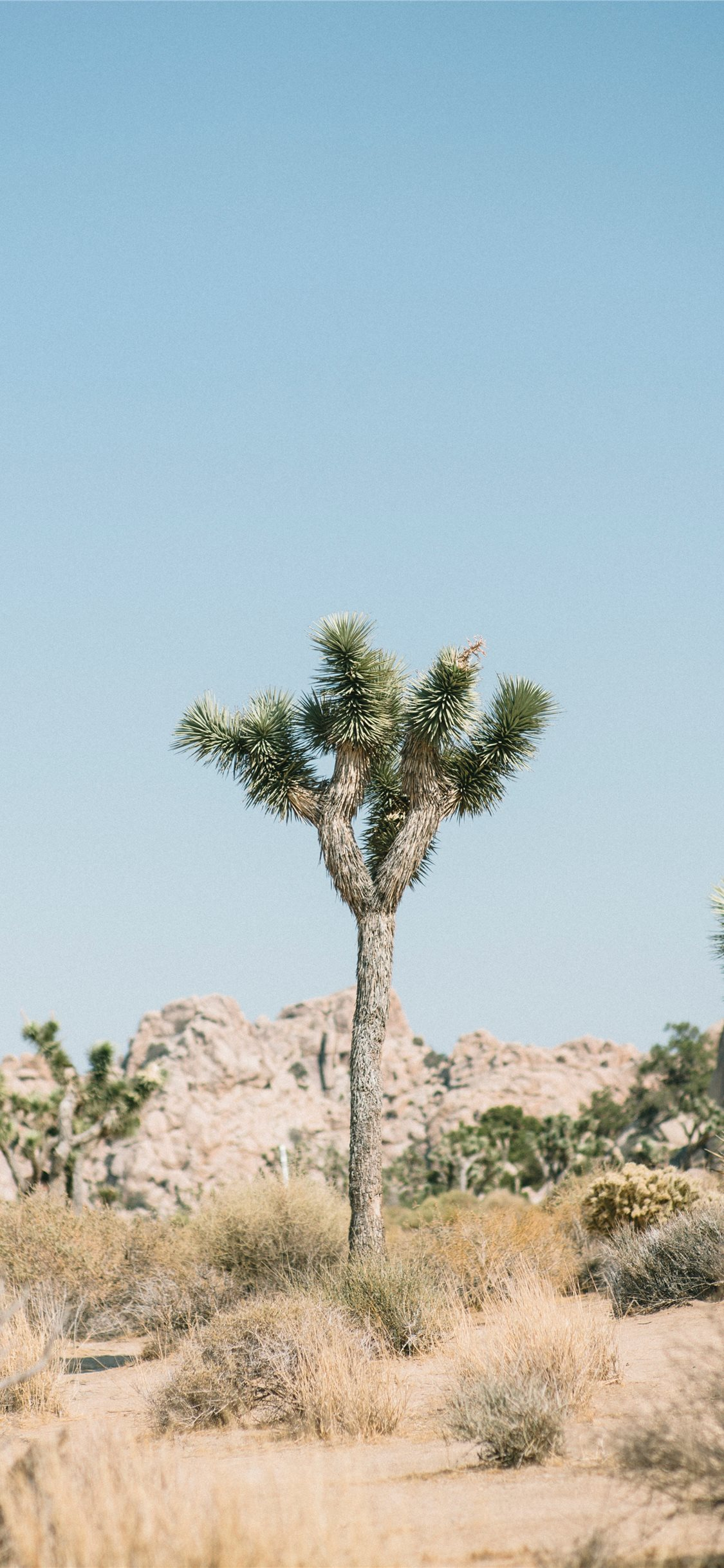 Joshua Tree National Park  United States iPhone X wallpaper