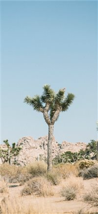 Joshua Tree National Park  United States iPhone X(S/Max/R) wallpaper