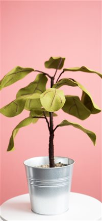 Ficus plant from Felt iPhone X(S/Max/R) wallpaper