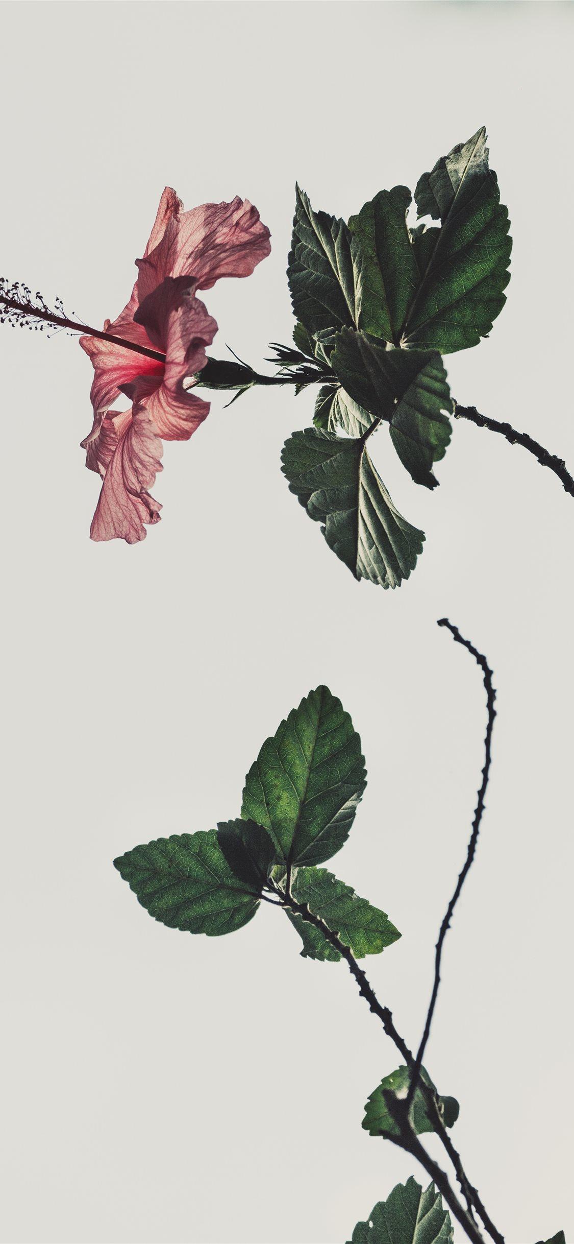 Best Roses Iphone X Wallpapers Hd Ilikewallpaper