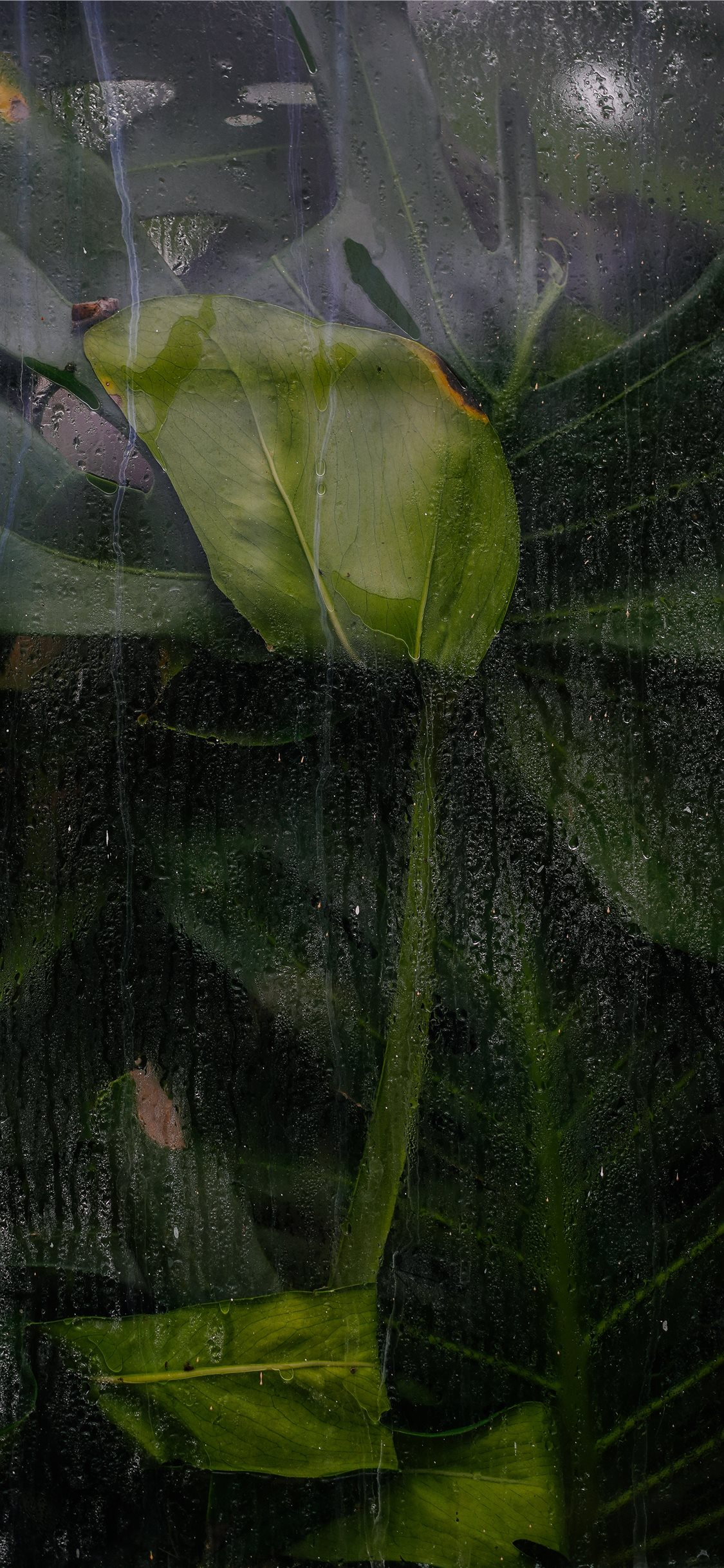 Green And Black Abstract Painting Iphone X Wallpapers Free