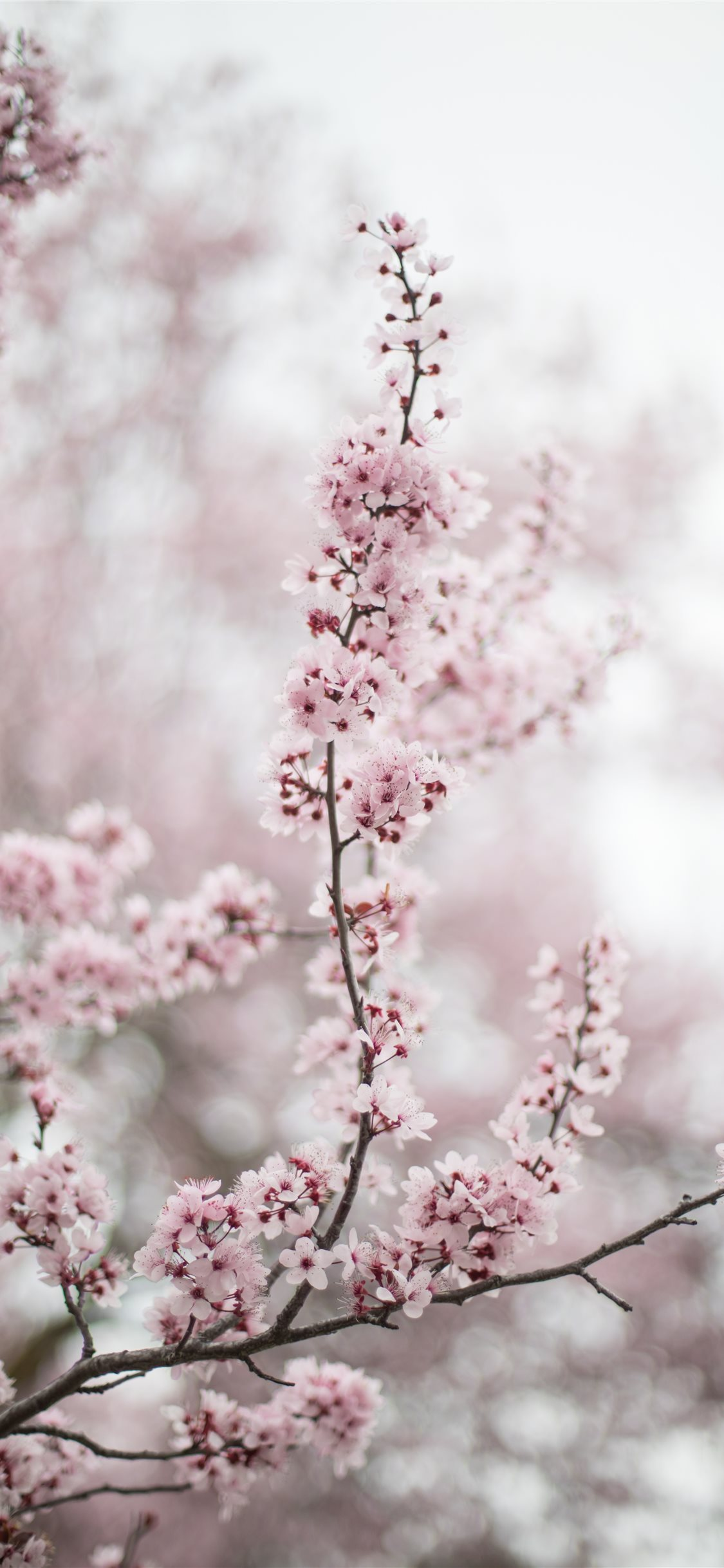 Best Spring Iphone X Wallpapers Hd Ilikewallpaper