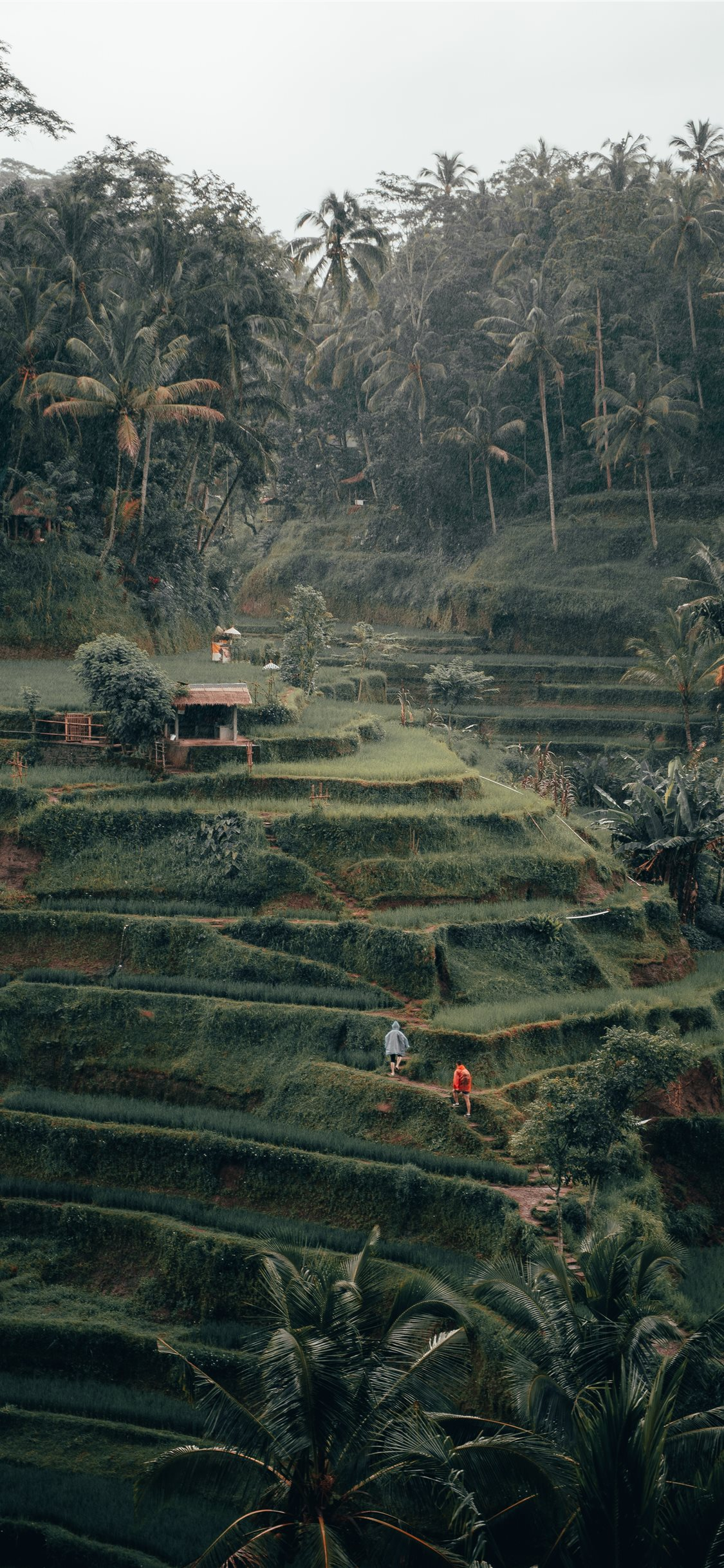 Tegalalang Rice Terrace Ubud Bali Iphone X Wallpapers Free