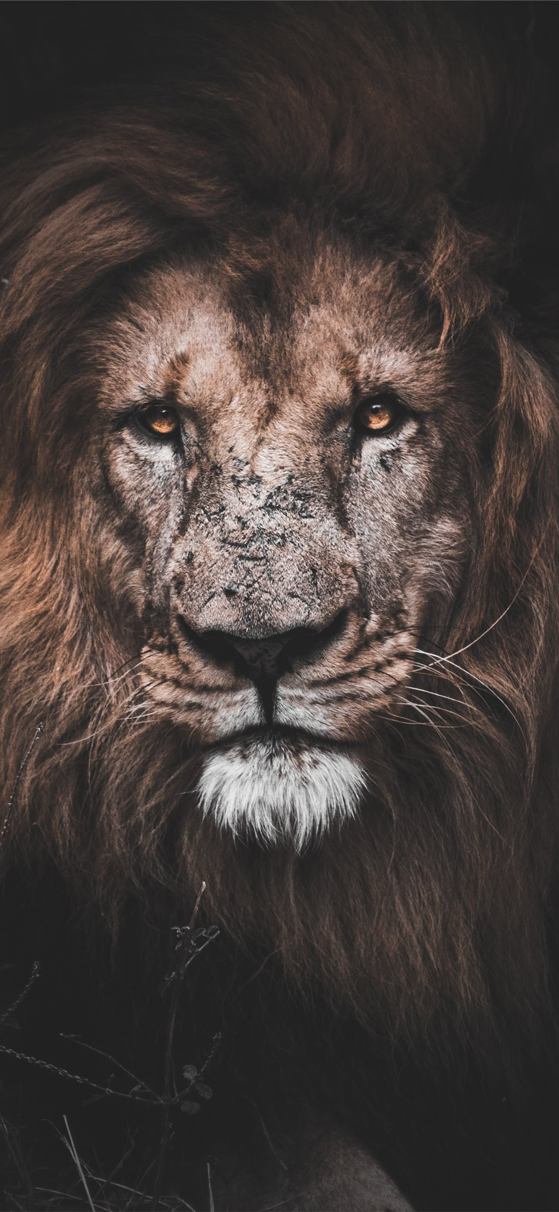 Best Lion Iphone X Wallpapers Hd Ilikewallpaper