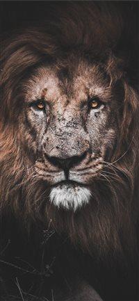 Best Lion Iphone X Wallpapers Hd Ilikewallpaper