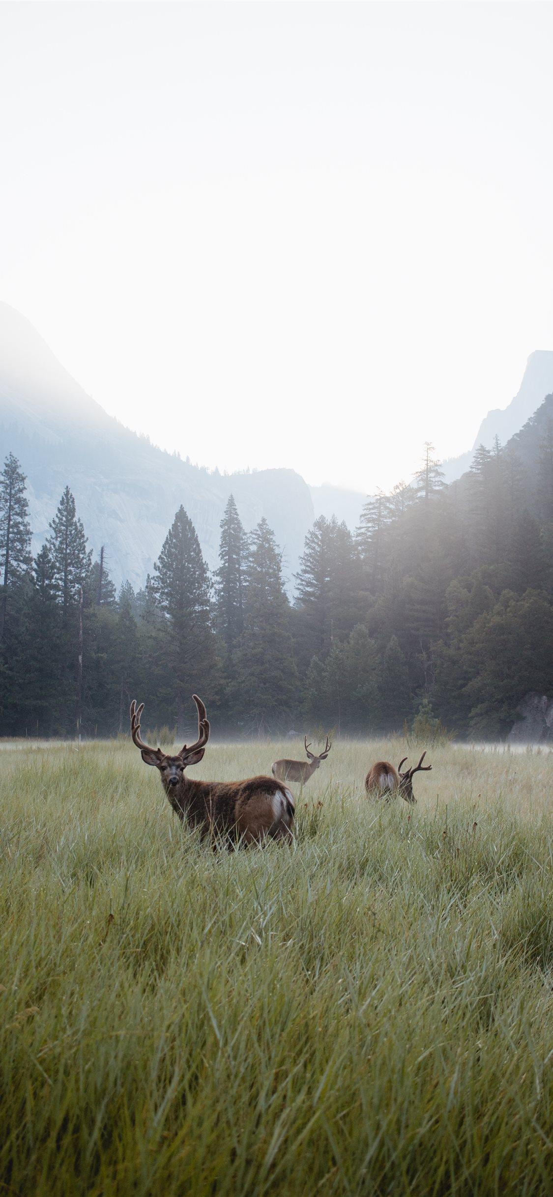 Yosemite Valley at Dawn iPhone X