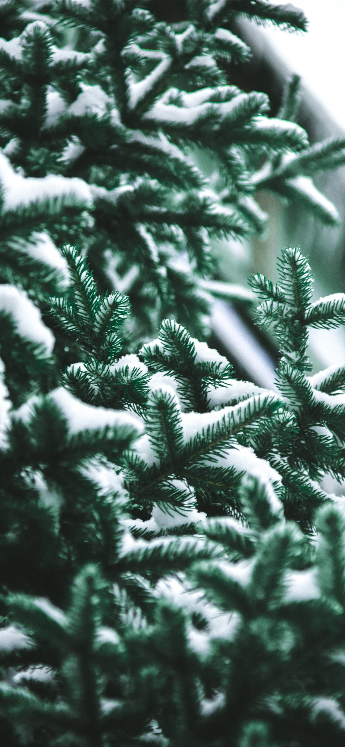 Close Up Photography Of Snow Covered Green Pine Tr Iphone