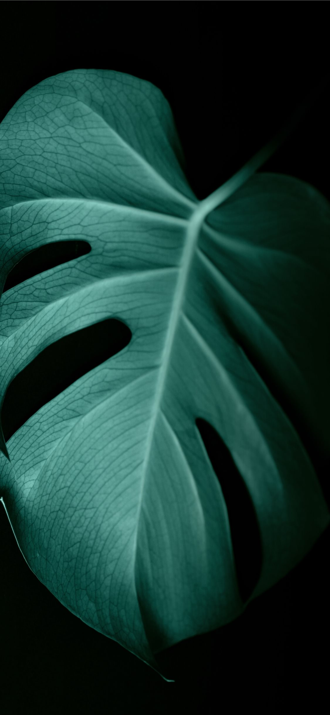 Green Leaf In Dark Surface Iphone X Wallpapers Free Download