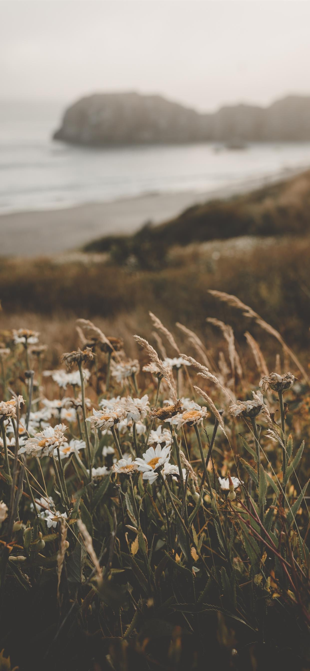 Flowers At The Beach Iphone X Wallpapers Free Download