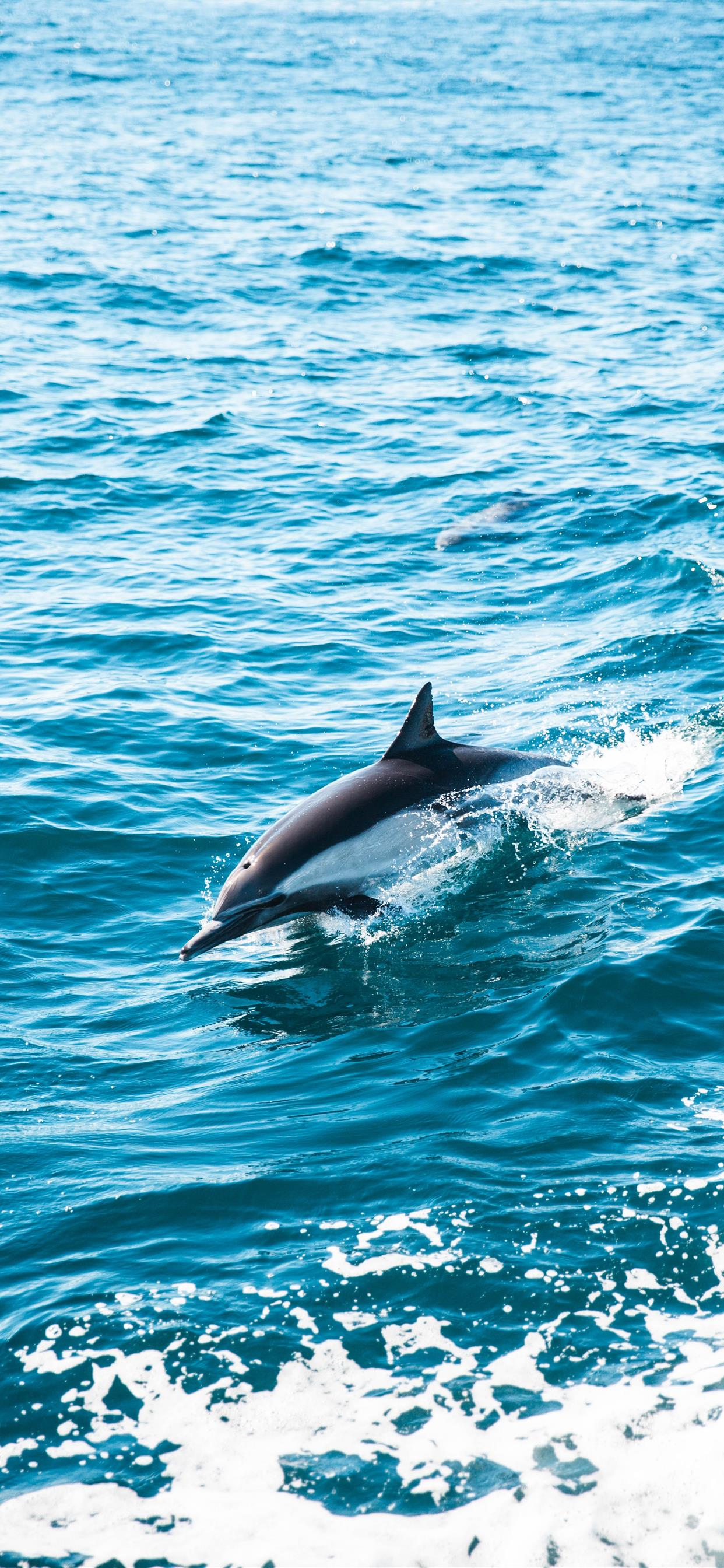 Dolphin Dive Iphone X Wallpapers Free Download