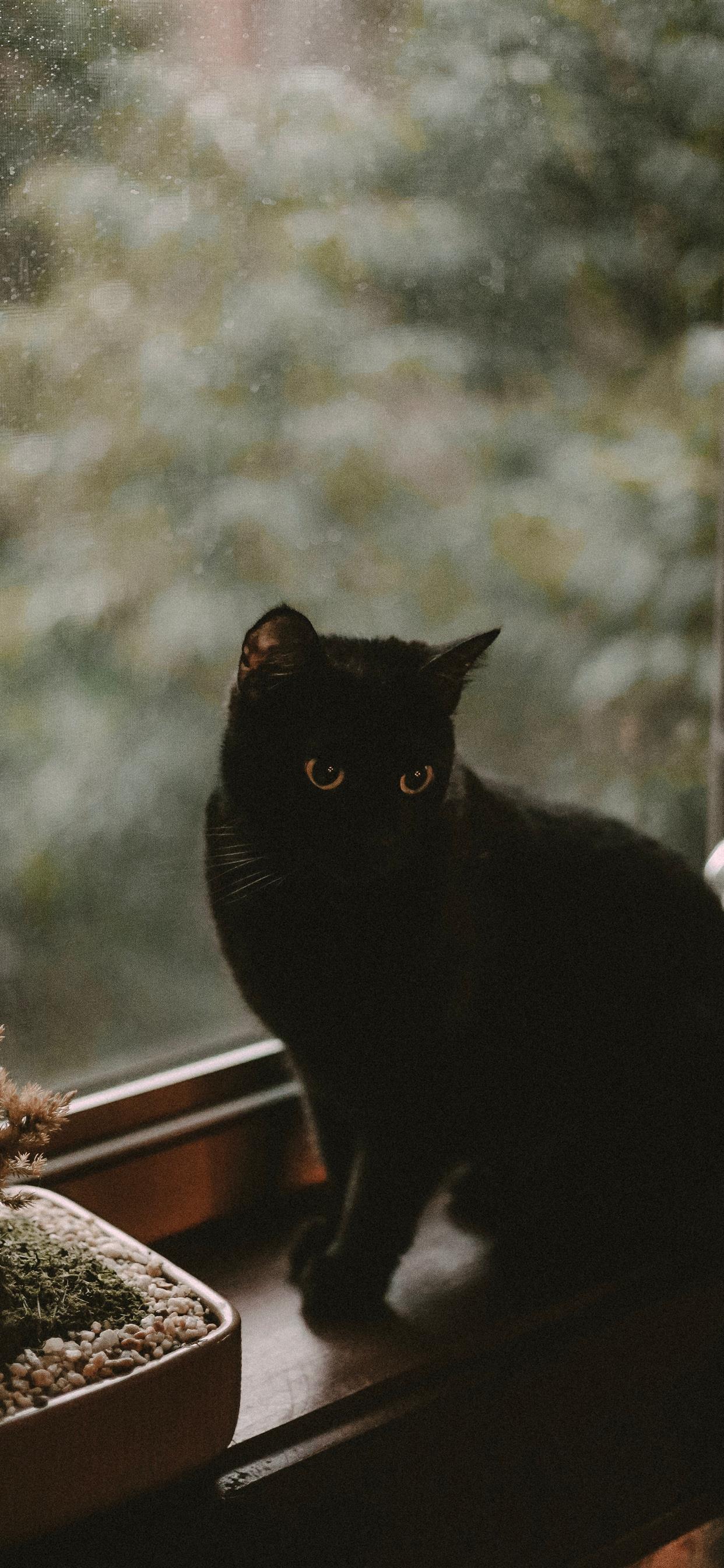 Black Cat Iphone Wallpapers Free Download