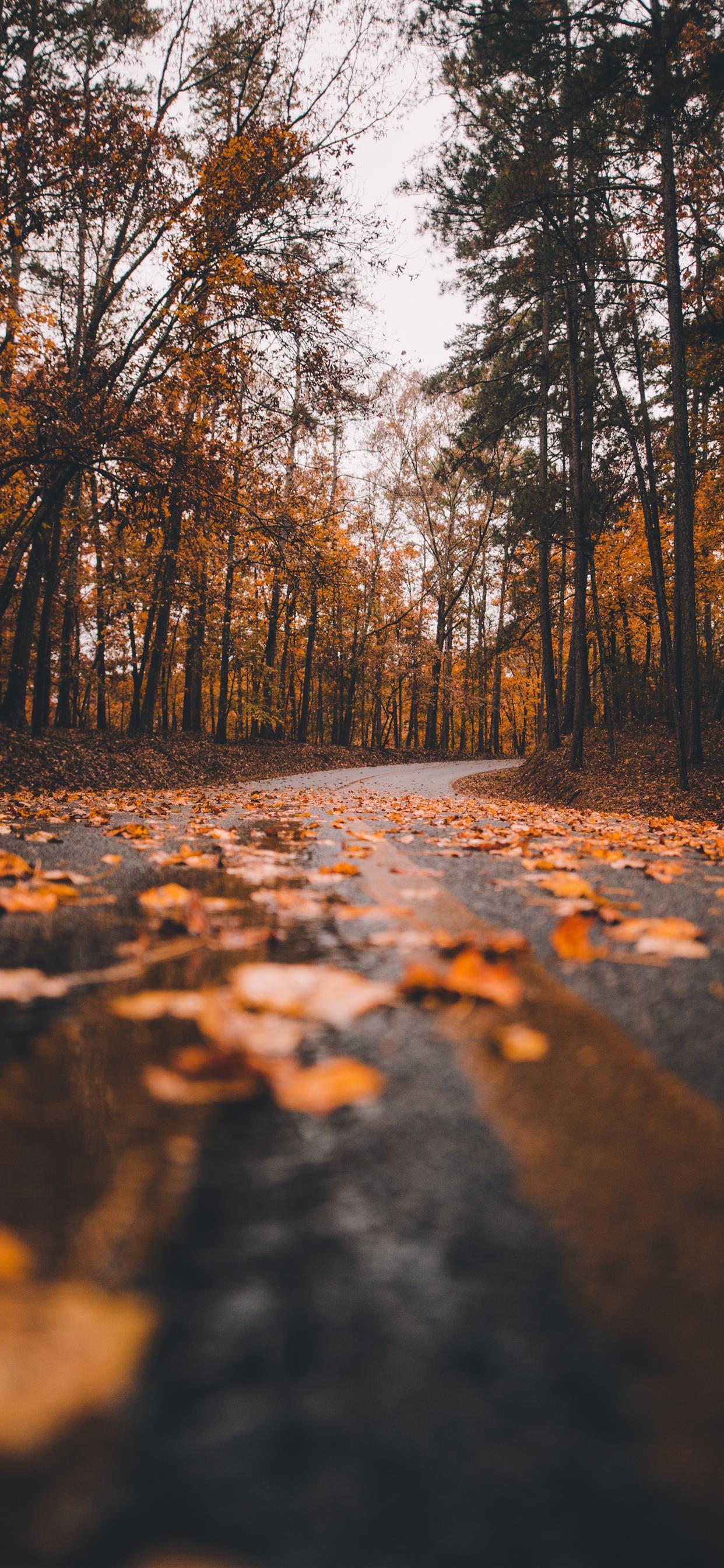 Fall is gone iphone xs max wallpaper