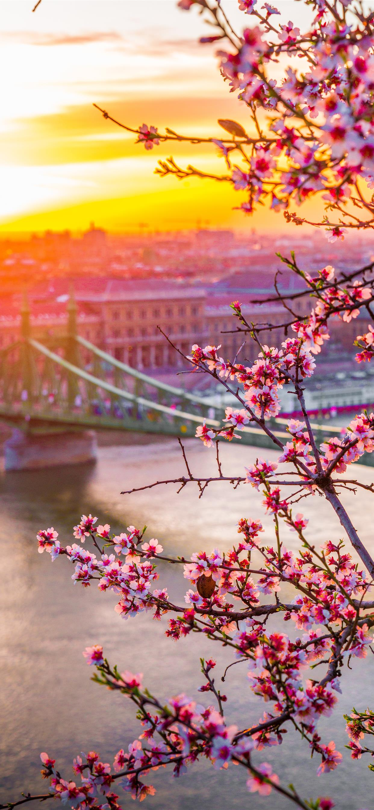 Liberty Bridge In Hungary Spring Edition Iphone Wallpapers Free
