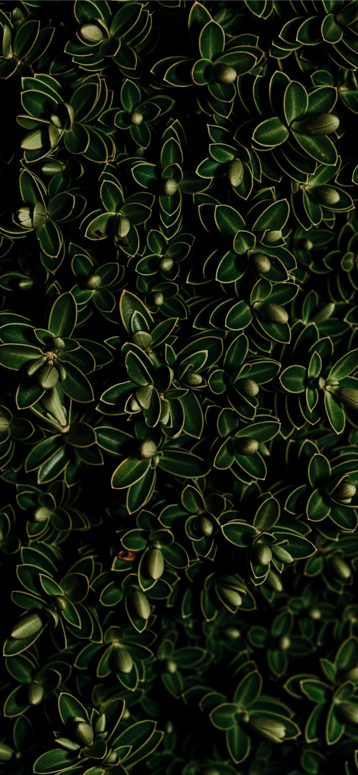 Green Leaf Plant Iphone X Wallpapers Free Download