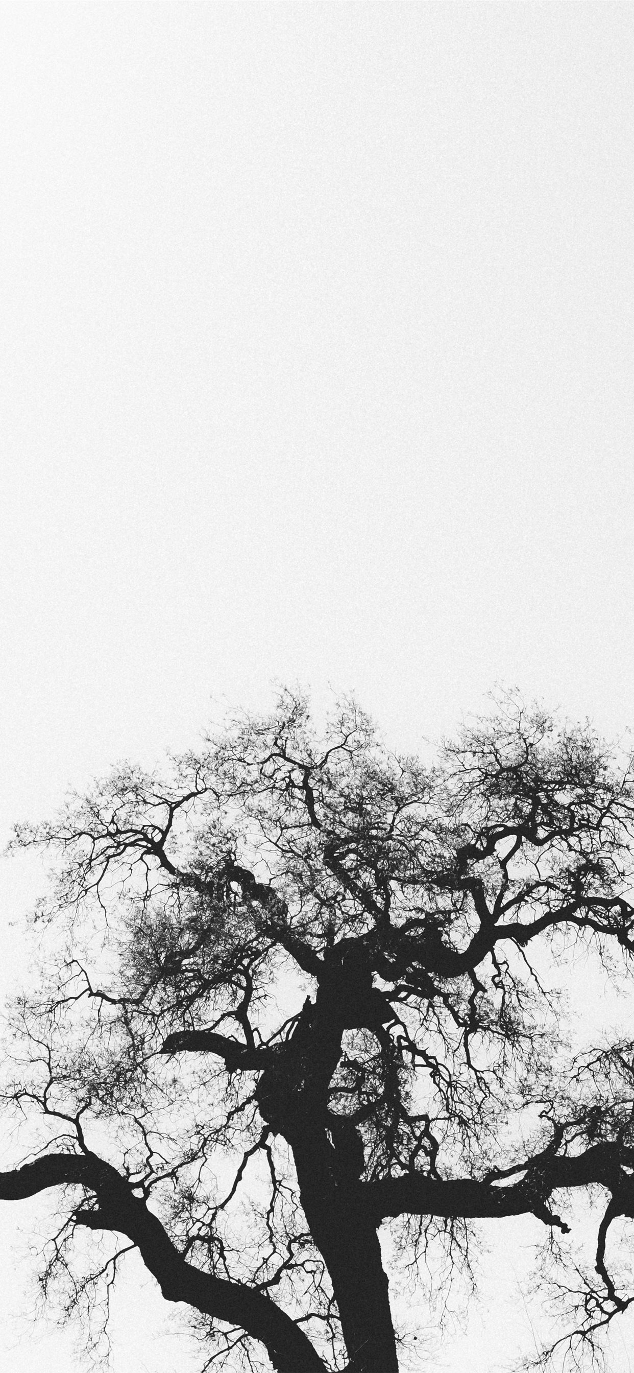 Silhouette Of Bare Tree Iphone X Wallpapers Free Download