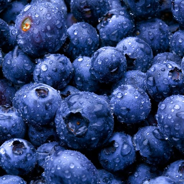 Blue Berries iPad wallpaper