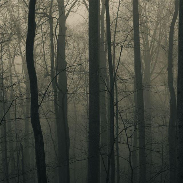 Foggy Forest iPad wallpaper