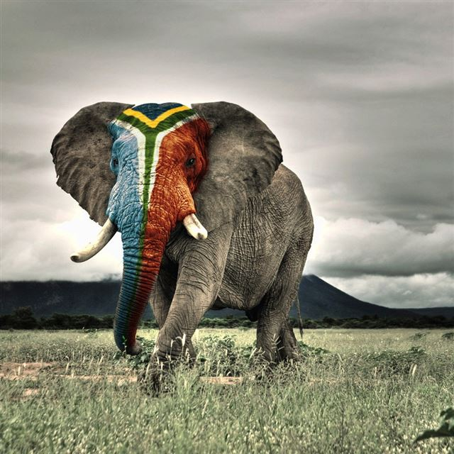 Africa Elephant iPad wallpaper