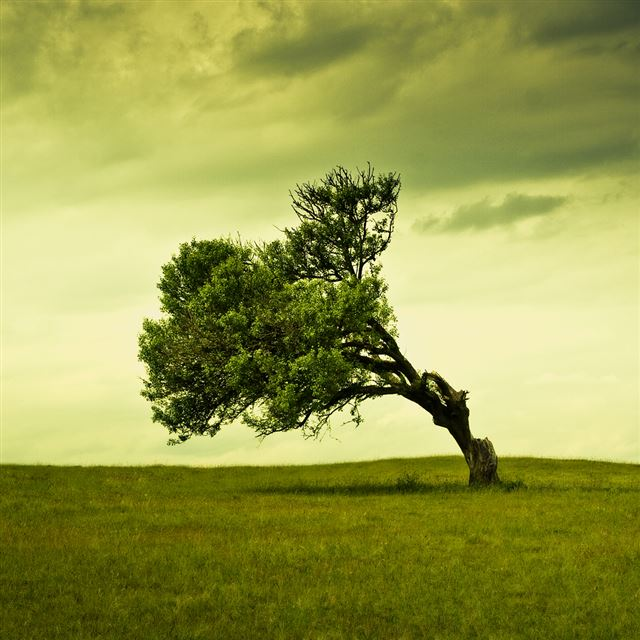 Windy Tree iPad wallpaper