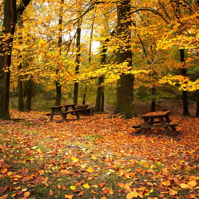 Autumn Leaves Falling Down iPad wallpaper
