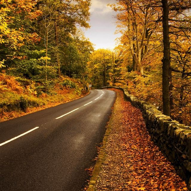 Autumn highway iPad wallpaper