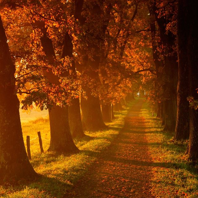 Autumn walk road iPad wallpaper