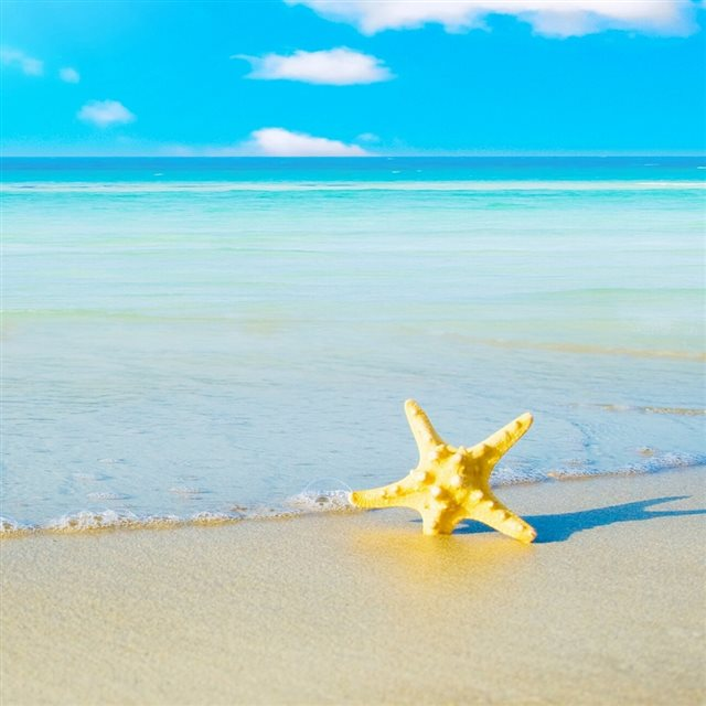 Starfish On The Beach 5 iPad wallpaper