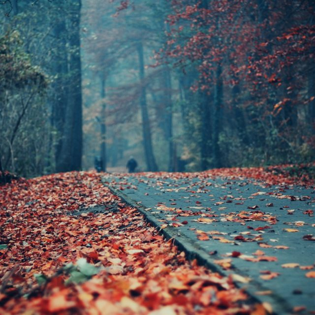 Road Deck Autumn Leaves iPad wallpaper
