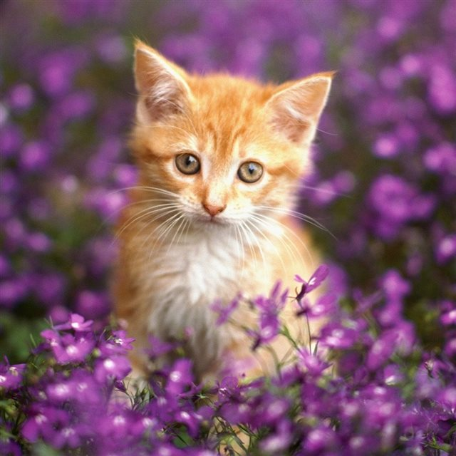Cute Cat In Flowers Ipad Wallpaper Download Iphone Wallpapers