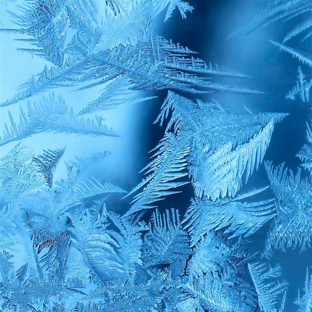 Ice leaves iPad wallpaper
