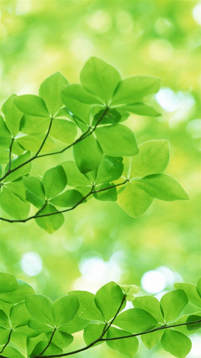 Nature Sunshine Green Leaves iPhone 8 wallpaper