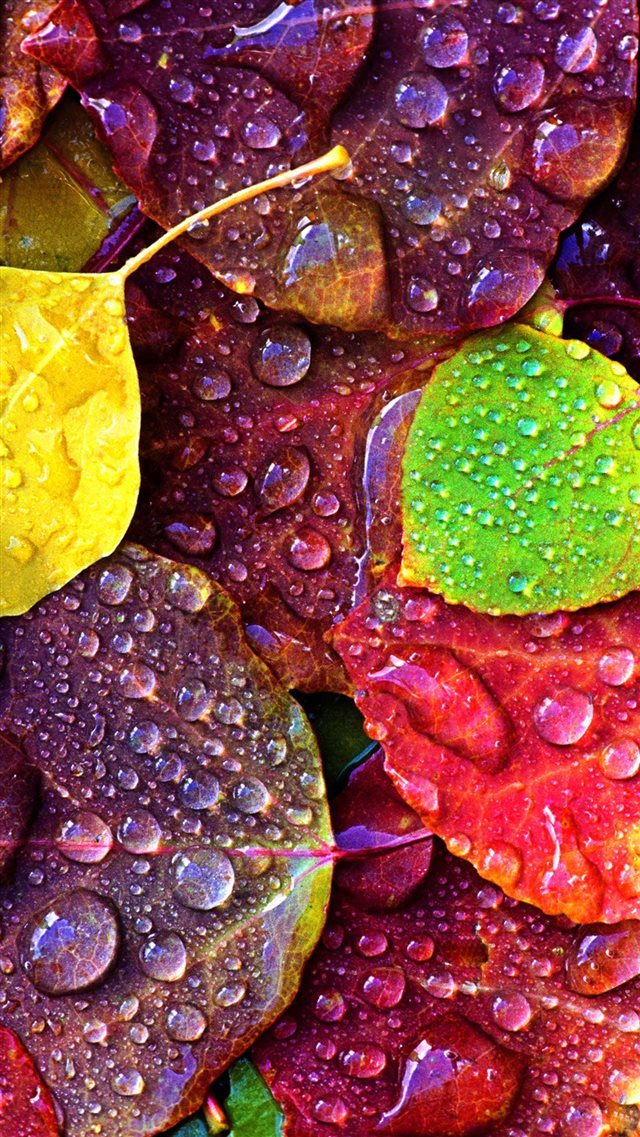 Drops on Colorful Leaves iPhone 8 wallpaper