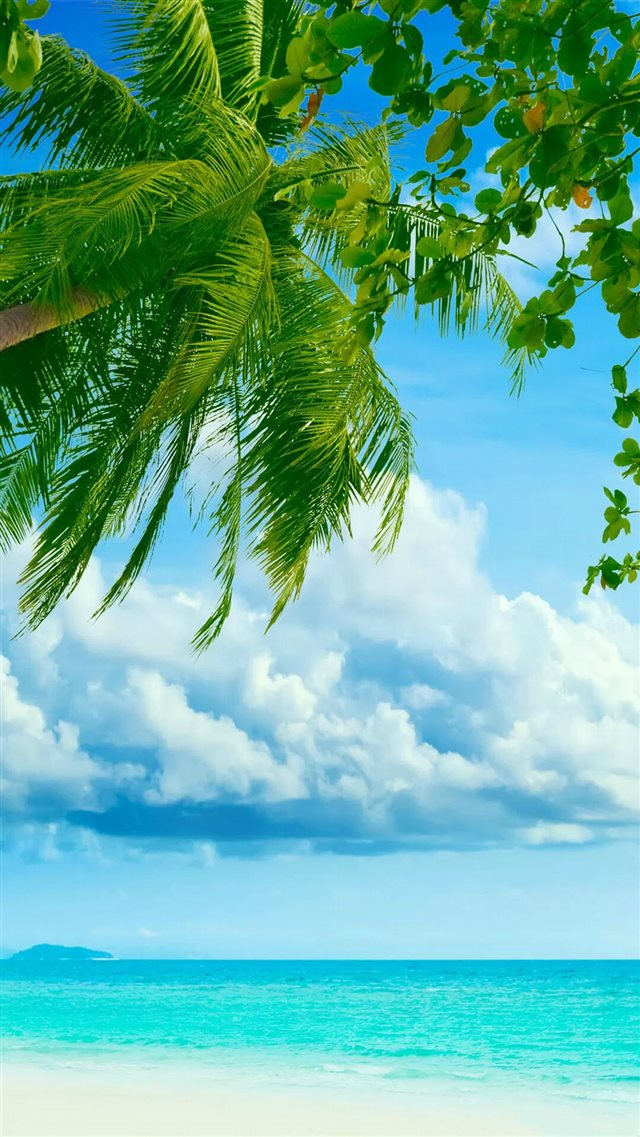 Tropical Beach Coconut Tree iPhone 8 wallpaper