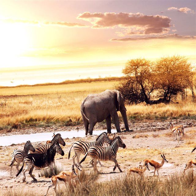 Wild Animals  In Africa iPad wallpaper