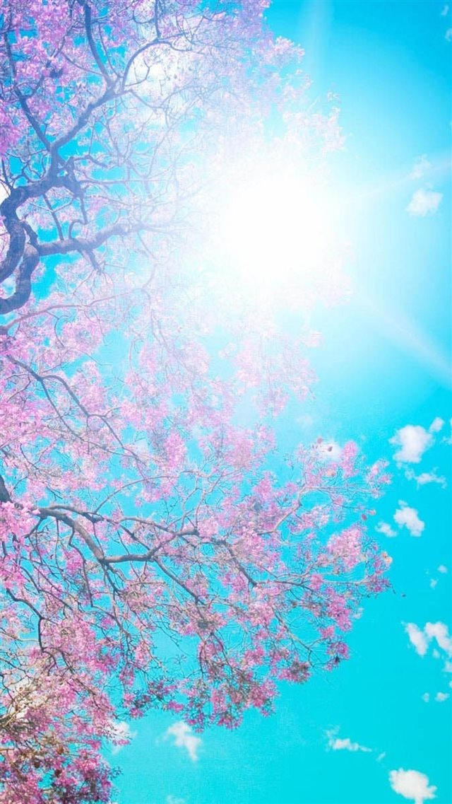 Sunny Pink Blossom Tree Landscapee  iPhone 8 wallpaper
