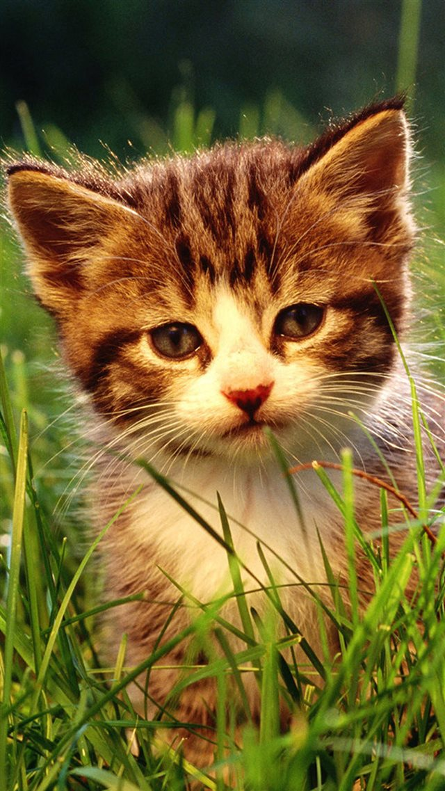 Little Cat In Grassland iPhone 8 wallpaper