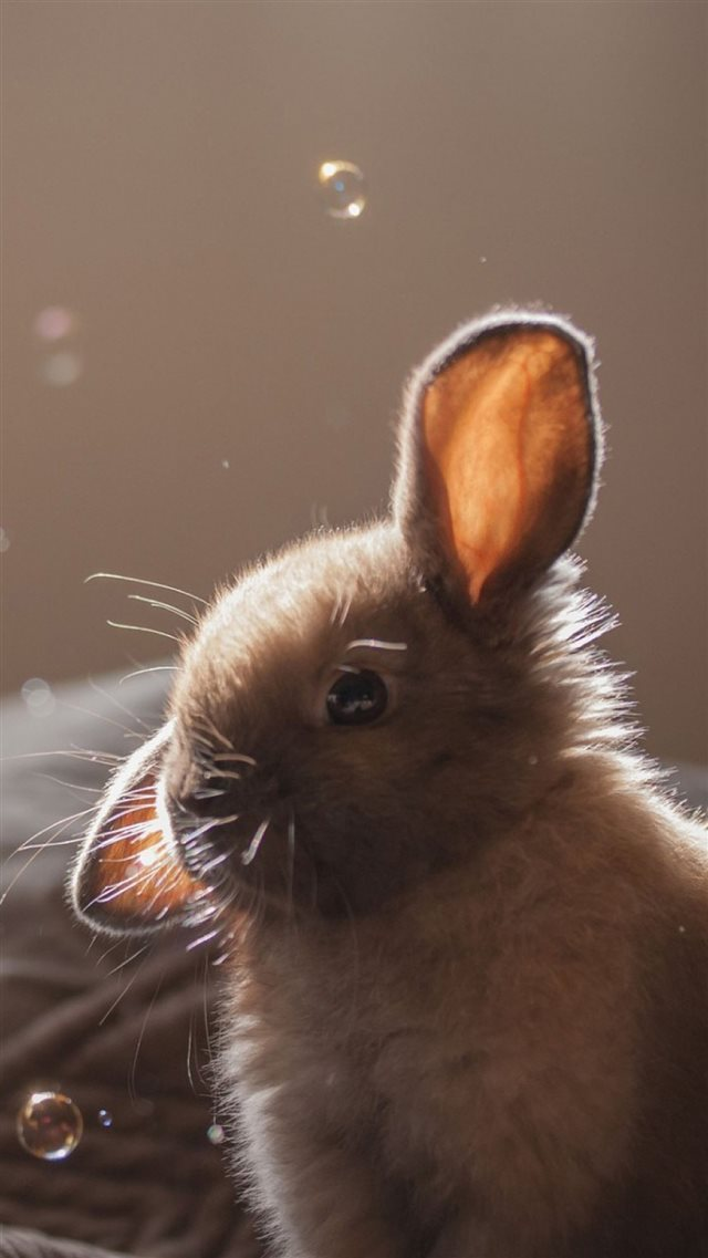 Cute Bunny Soap Bubbles iPhone 8 wallpaper