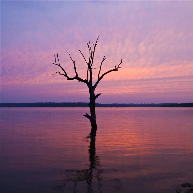 Lonely Tree In Purple Lake iPad wallpaper
