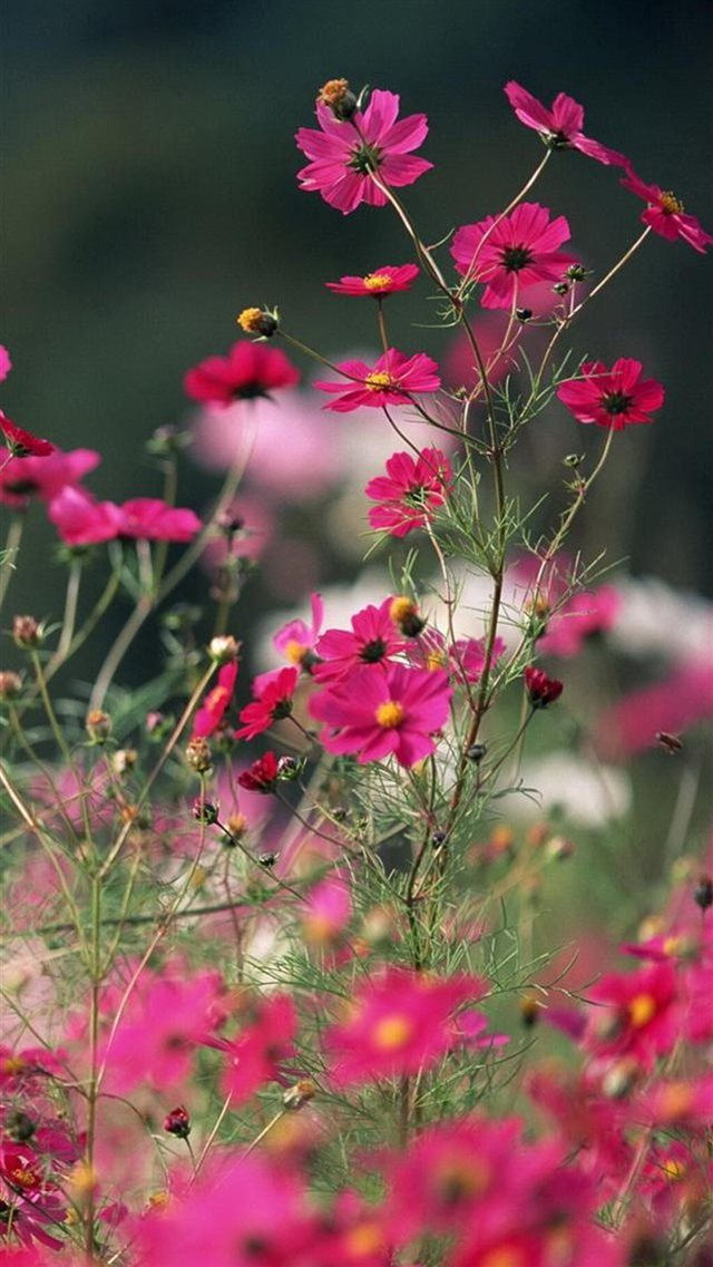 Nature Little Pink Flower Branch iPhone 8 wallpaper