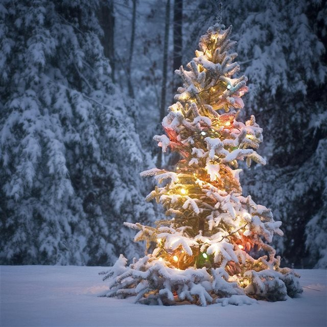 Neon Light On Snowy Christmas Tree iPad wallpaper